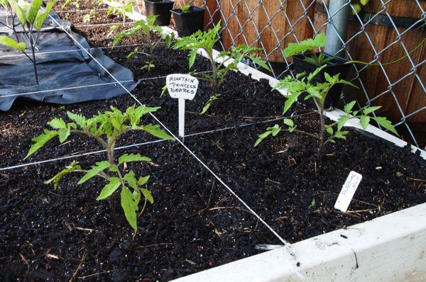 Tomato Tuesday/Upper South region 3mtnpr10