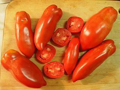 Tomato Tuesday/Upper South region Opalka10