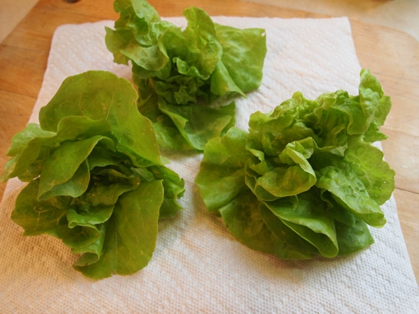 LETTUCE FLAVORS? Tomthu10