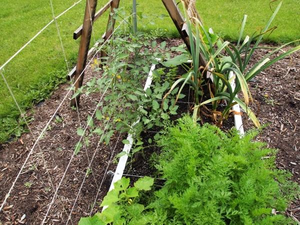 Tomato Tuesday/Upper South region Wk25xg10