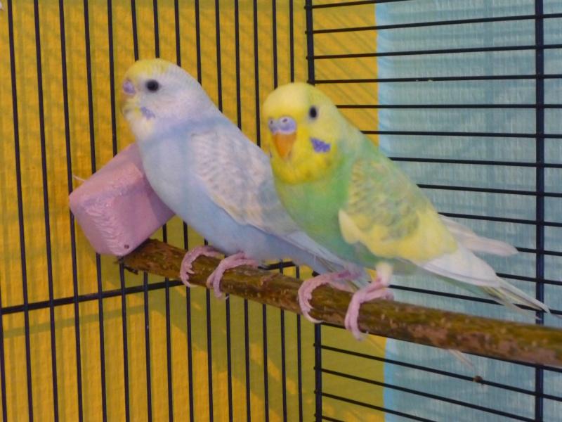 Titi et Winnie  Perruc15
