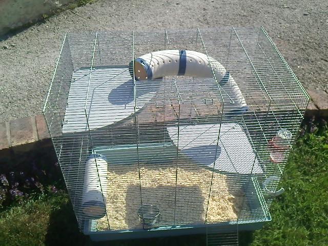 Cherche cage pour 2 rats =) ( vers Soissons ) Img05211