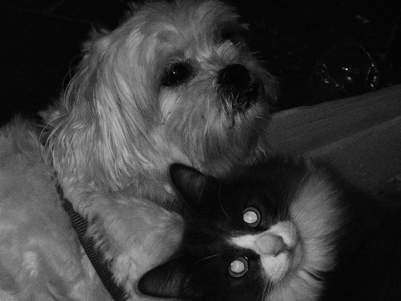 Fil sur les animaux domestiques (chiens, chats, oiseaux, etc.) - Page 3 P1290211