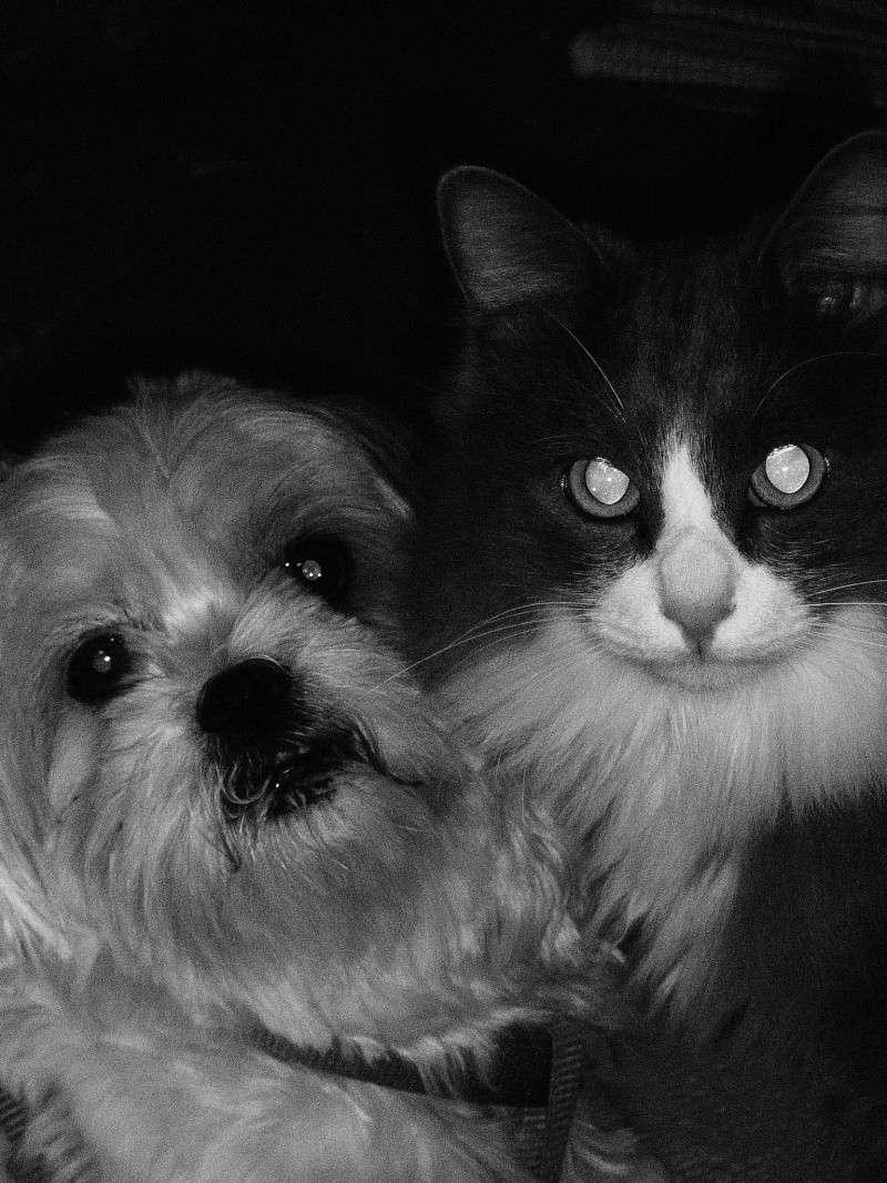 Fil sur les animaux domestiques (chiens, chats, oiseaux, etc.) - Page 3 P1290212
