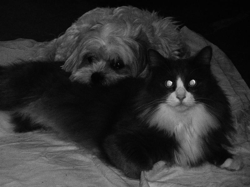 Fil sur les animaux domestiques (chiens, chats, oiseaux, etc.) - Page 3 P1290213