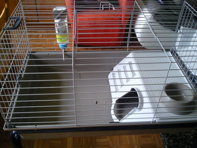 Cage cochon d'inde 01 Photo020