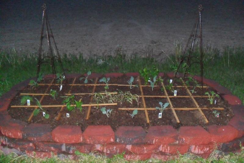 My first garden! :) Sam_0612
