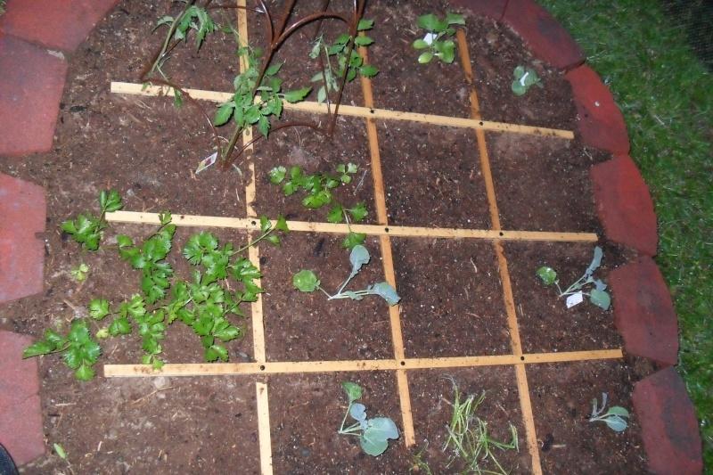 My first garden! :) Sam_0614