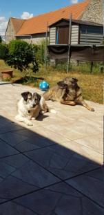 LOGAN (gabarit petit/moyen) - né en 2014 EN FA DANS LE 60, rescapé d'Oltenita, parrainé par Fanfounette et Mirko78 - R-SOS-SC-30MA - Page 6 20200835
