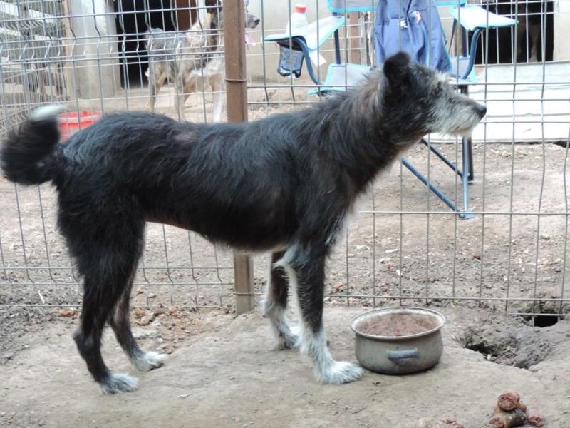 NOYA, née en 2010, En FA dans le 94 - type griffon - Parrainée par Yemtsi-R-SOS-FB-LBC-SC-AS-30MA - Page 4 88_noy10