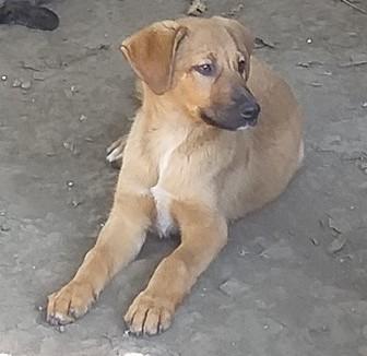 choupy - CHOUPY mâle né en Juin 2019 portée de 5 trouvés par Lénuta en septembre 2019- marrainé par Réglisse -R- Choupy13