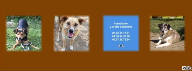 Week-end Adoption du 27 et 28 Janvier Pixiz-12