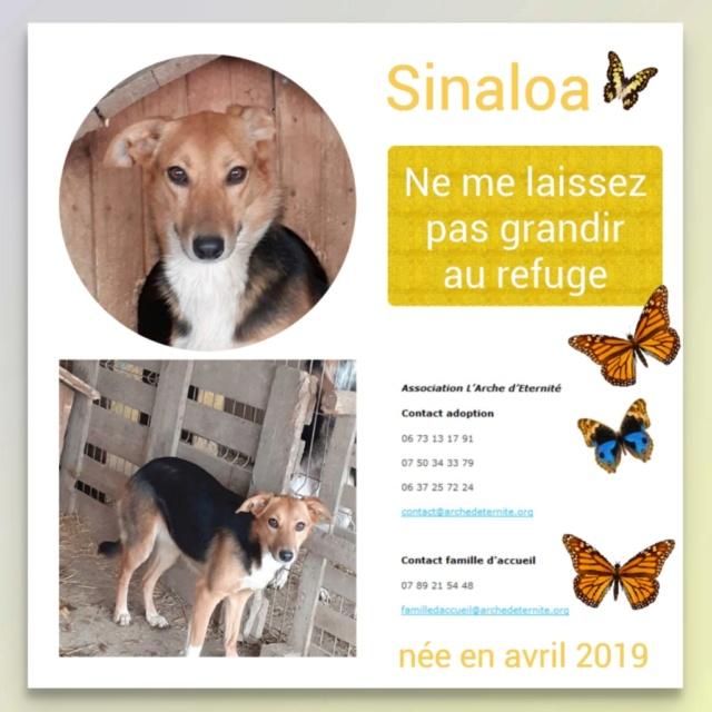 sina* - SINALOA - née en 03/2019 - amenée par Oana - EN FA DANS LE DÉPT 45 --R-SC -30MA- en FA dans le 45 Sinalo11