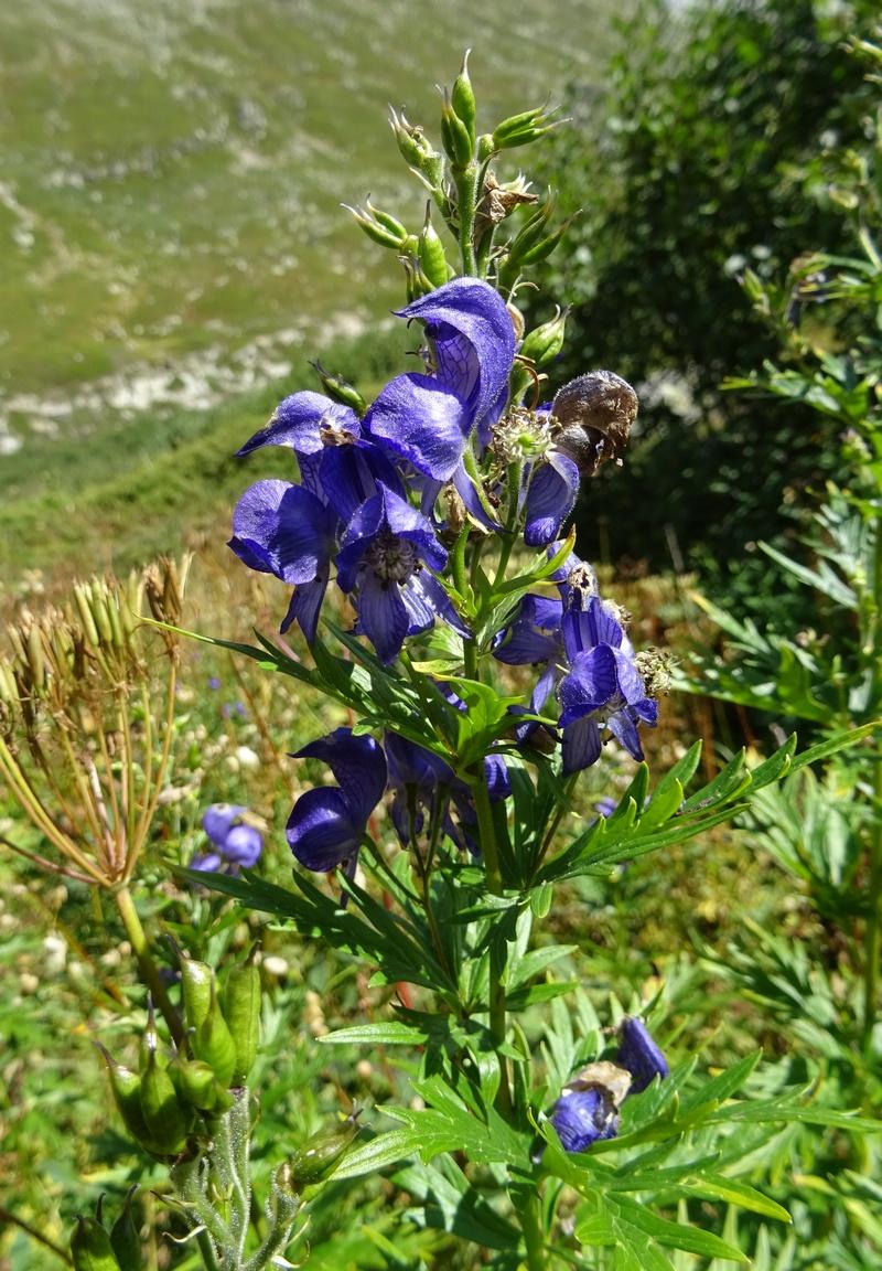 le plein de plantes en Vanoise fin août Ecot-e11