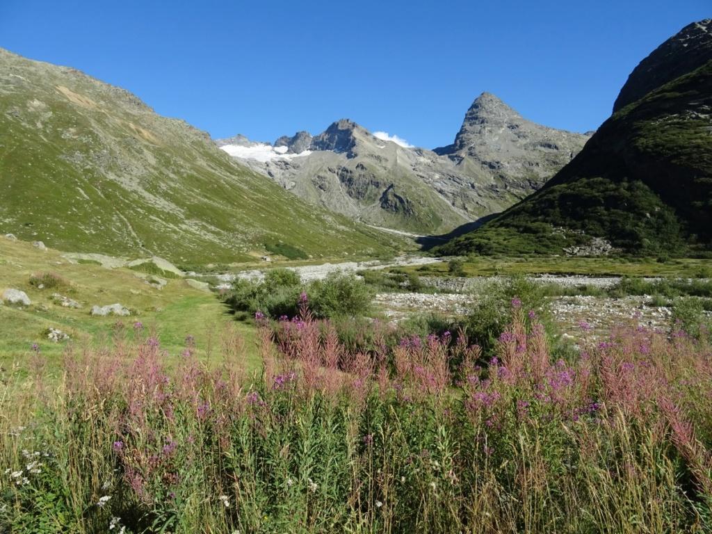 le plein de plantes en Vanoise fin août Ecot-e14