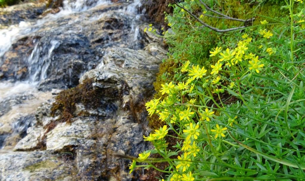 le plein de plantes en Vanoise fin août Ecot-e20