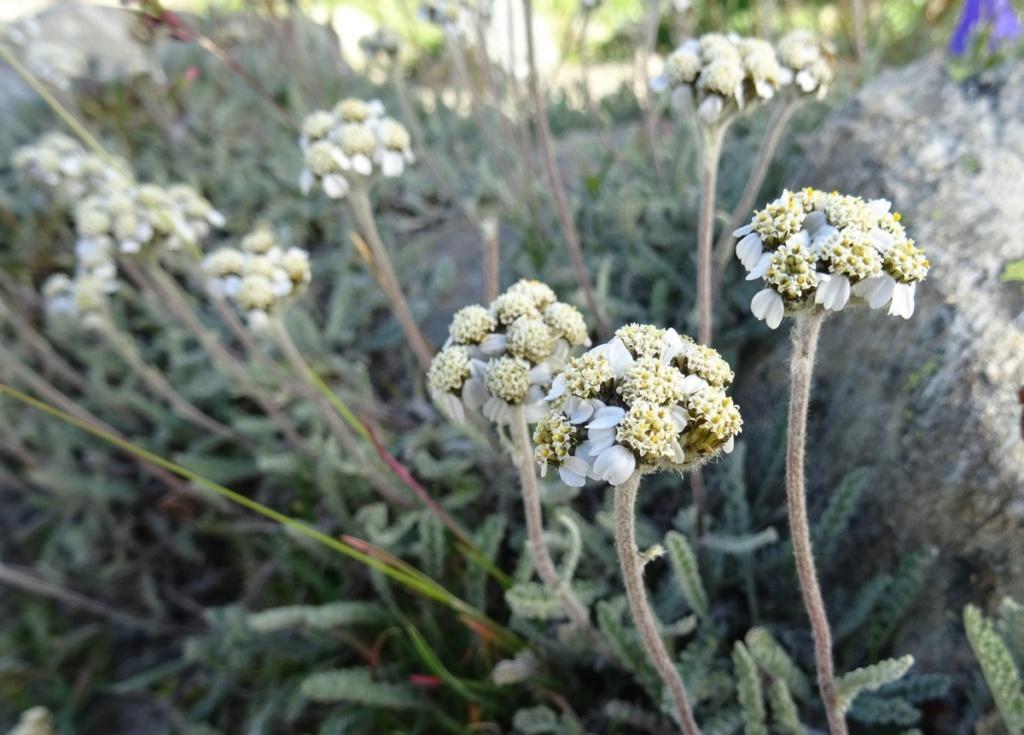 le plein de plantes en Vanoise fin août Ecot-e22