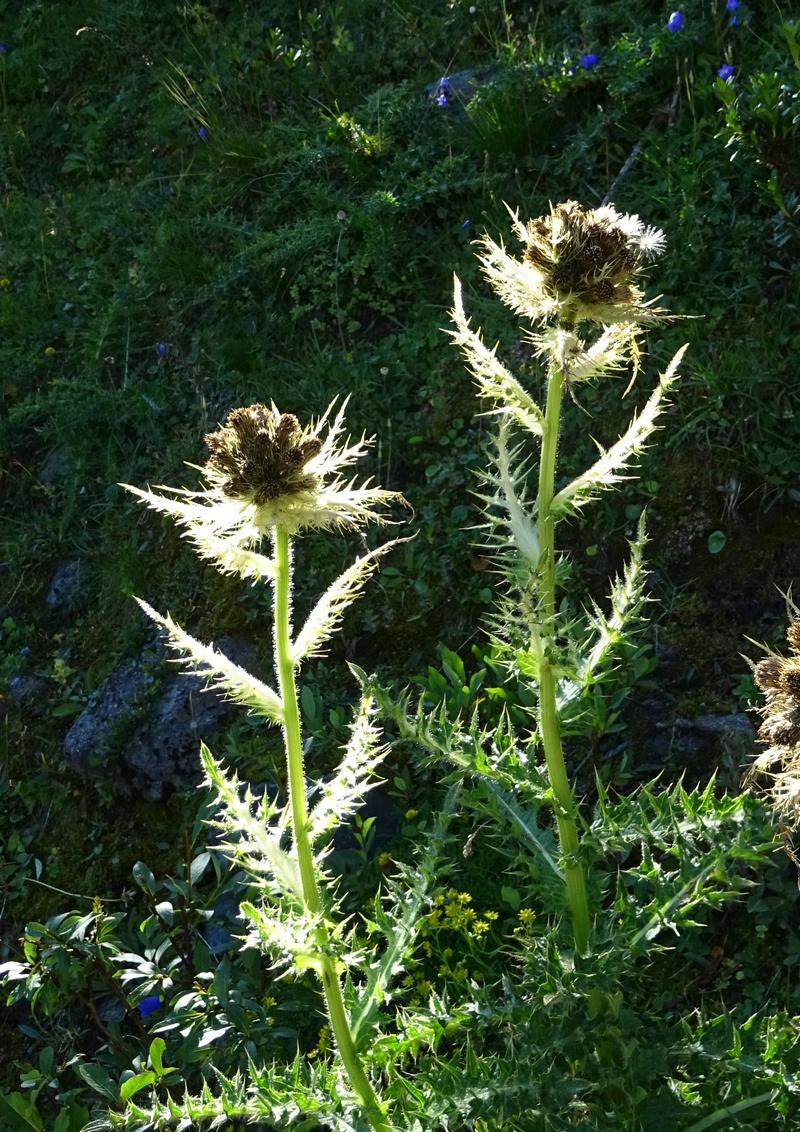 le plein de plantes en Vanoise fin août Ecot-e23