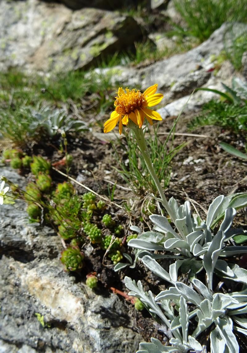 le plein de plantes en Vanoise fin août Ecot-e28