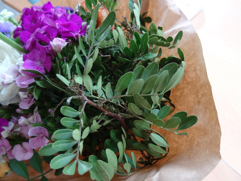 Grünzeug in Blumenstrauß - gelöst: Mastixstrauch (Pistacia lentiscus) Dsc06811