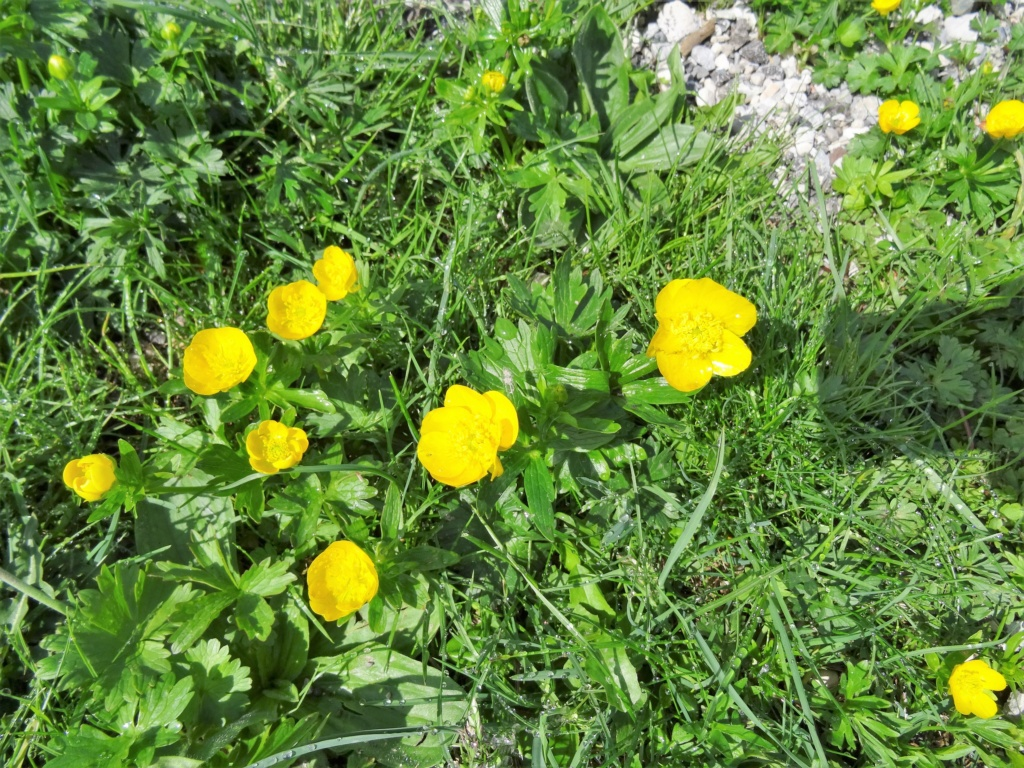 Wildblumen ( Sammelthread) - Seite 22 Dsc07510