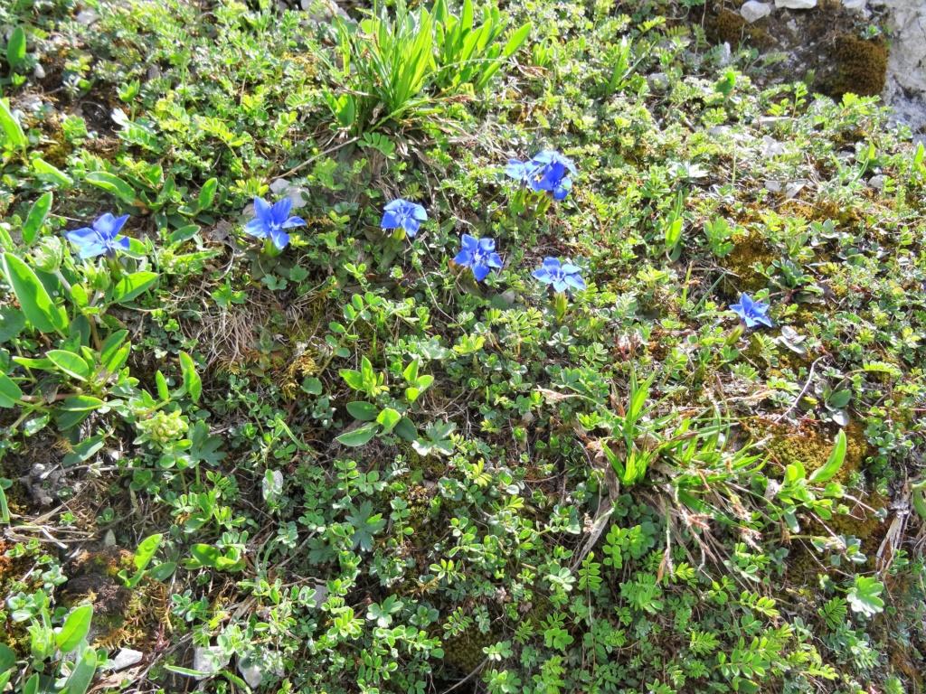Wildblumen ( Sammelthread) - Seite 22 Dsc07511