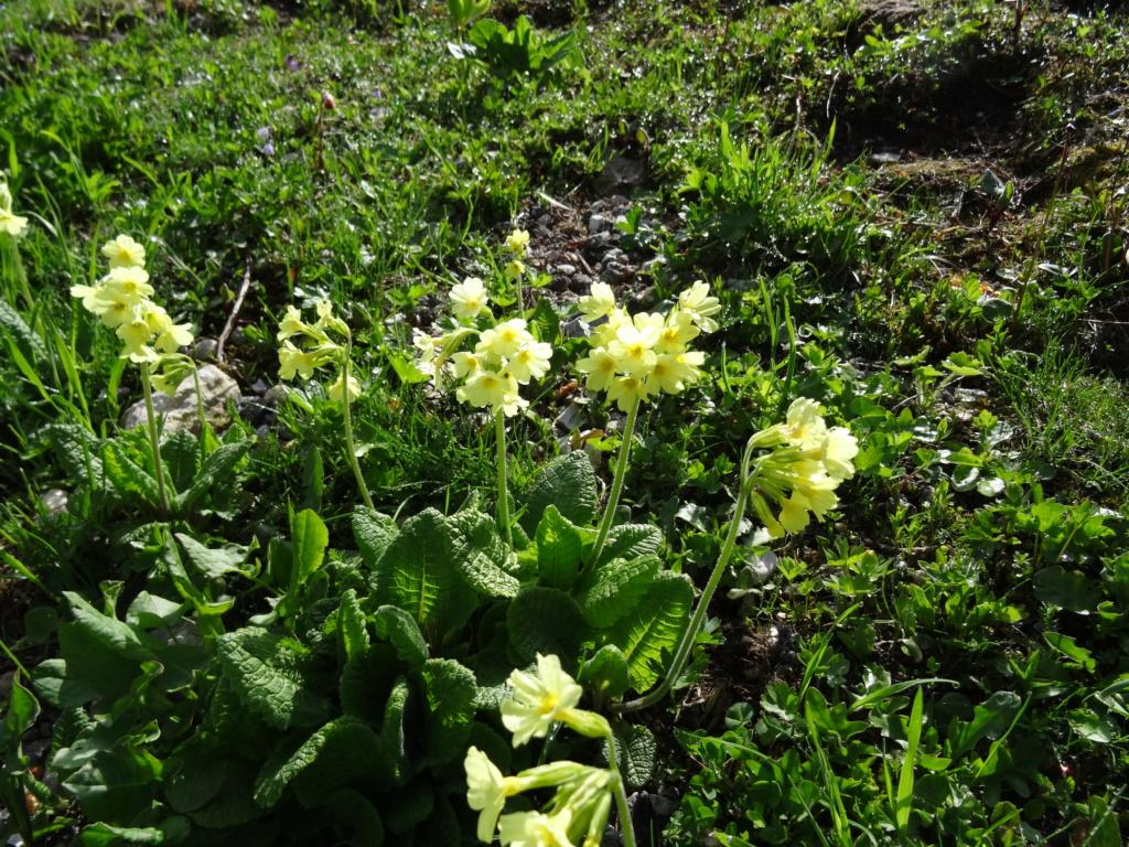 Wildblumen ( Sammelthread) - Seite 22 Dsc07513