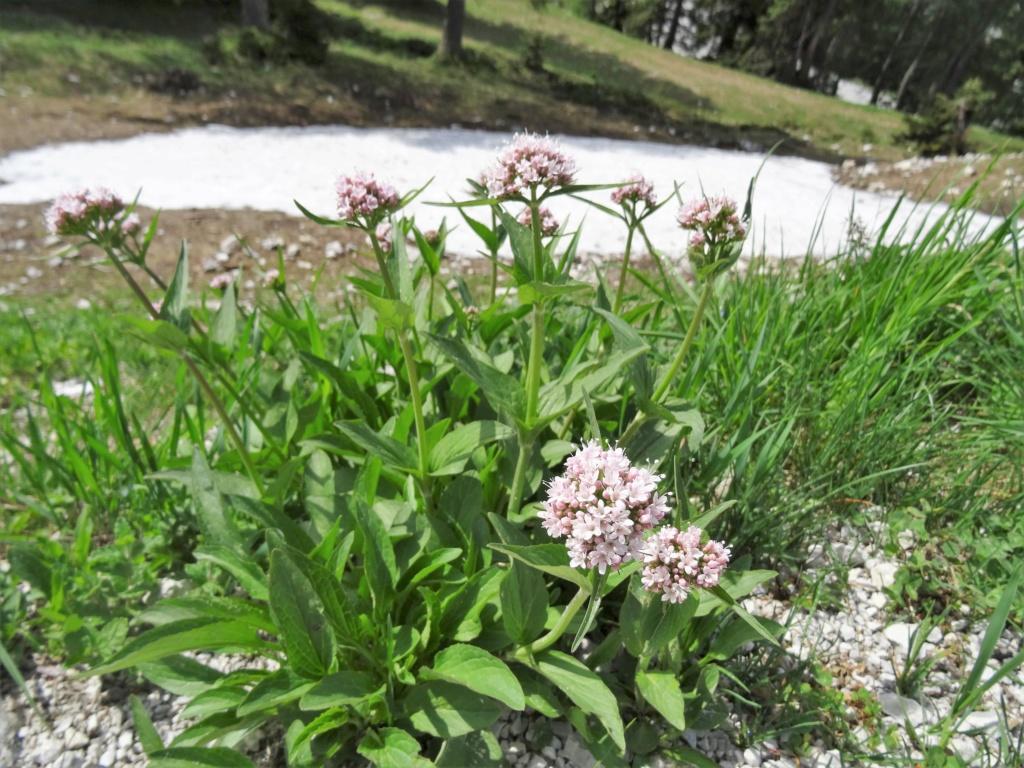 Wildblumen ( Sammelthread) - Seite 22 Dsc07515