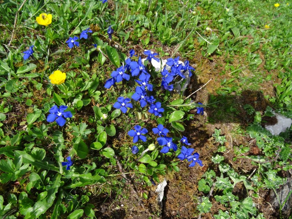 Wildblumen ( Sammelthread) - Seite 22 Dsc07517