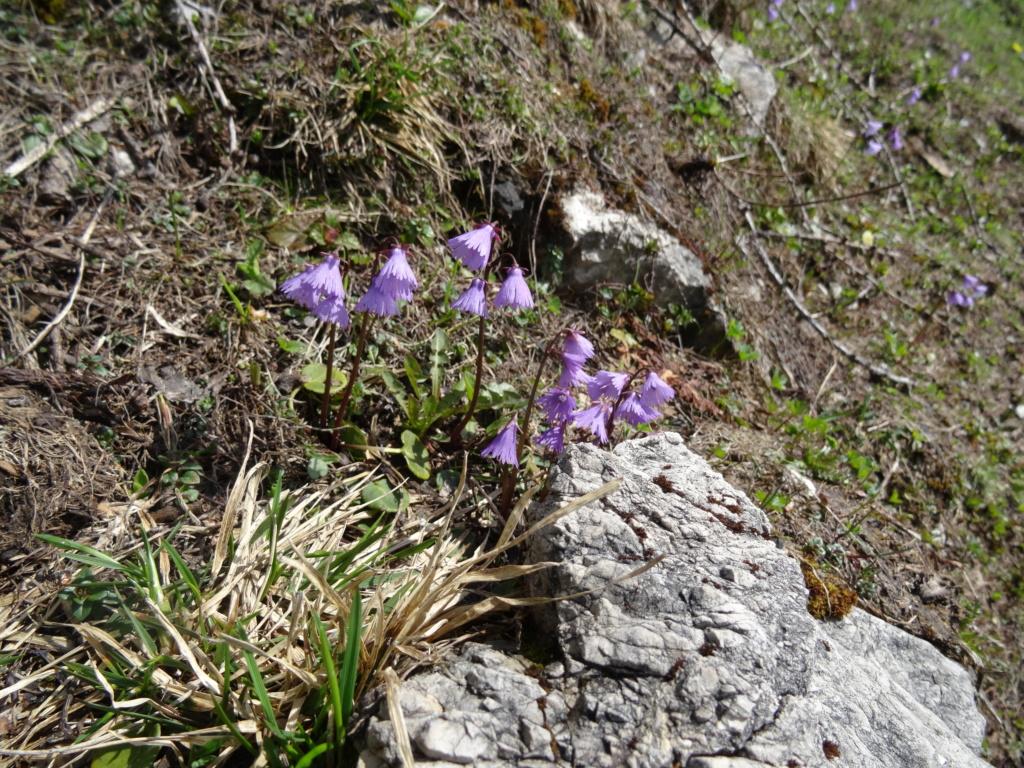 Wildblumen ( Sammelthread) - Seite 22 Dsc07518