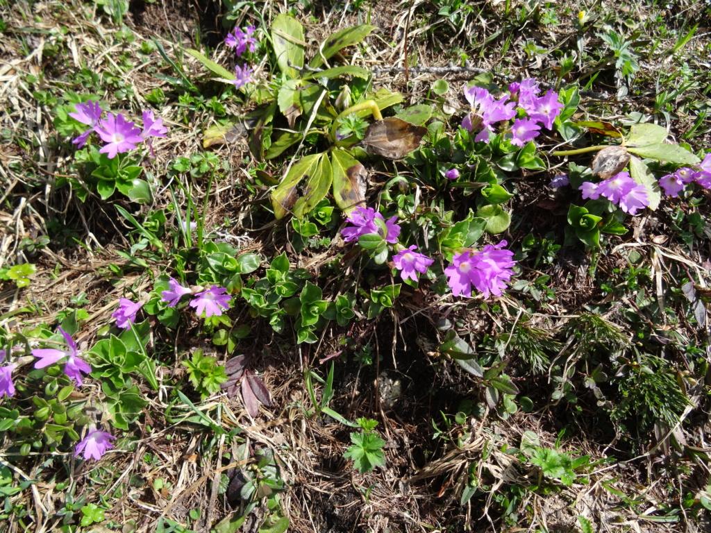 Wildblumen ( Sammelthread) - Seite 22 Dsc07519