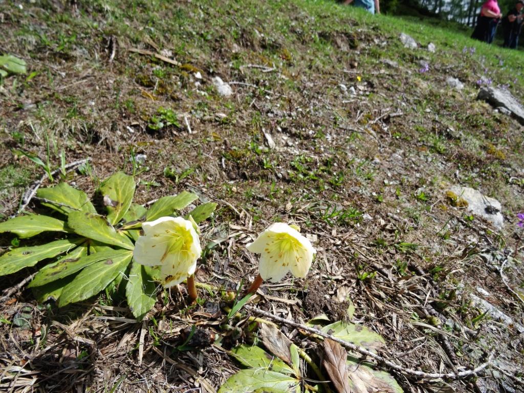 Wildblumen ( Sammelthread) - Seite 22 Dsc07521