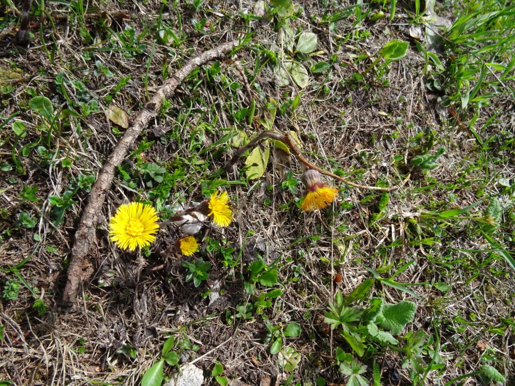 Wildblumen ( Sammelthread) - Seite 22 Dsc07525