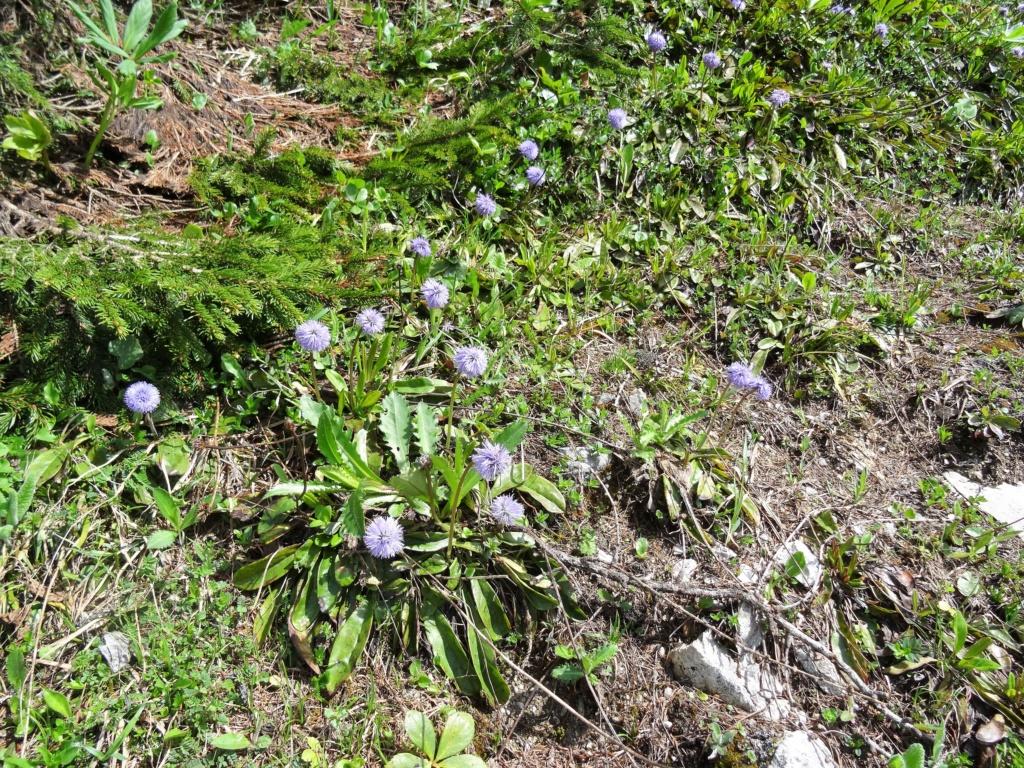 Wildblumen ( Sammelthread) - Seite 22 Dsc07526