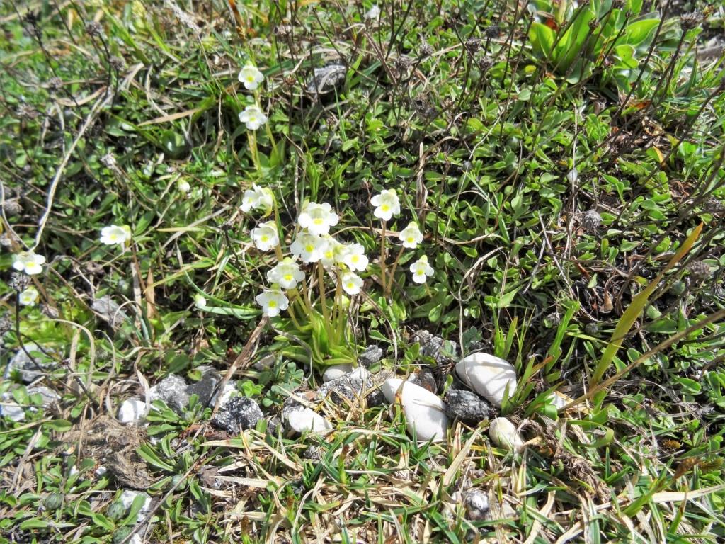 Wildblumen ( Sammelthread) - Seite 22 Dsc07529