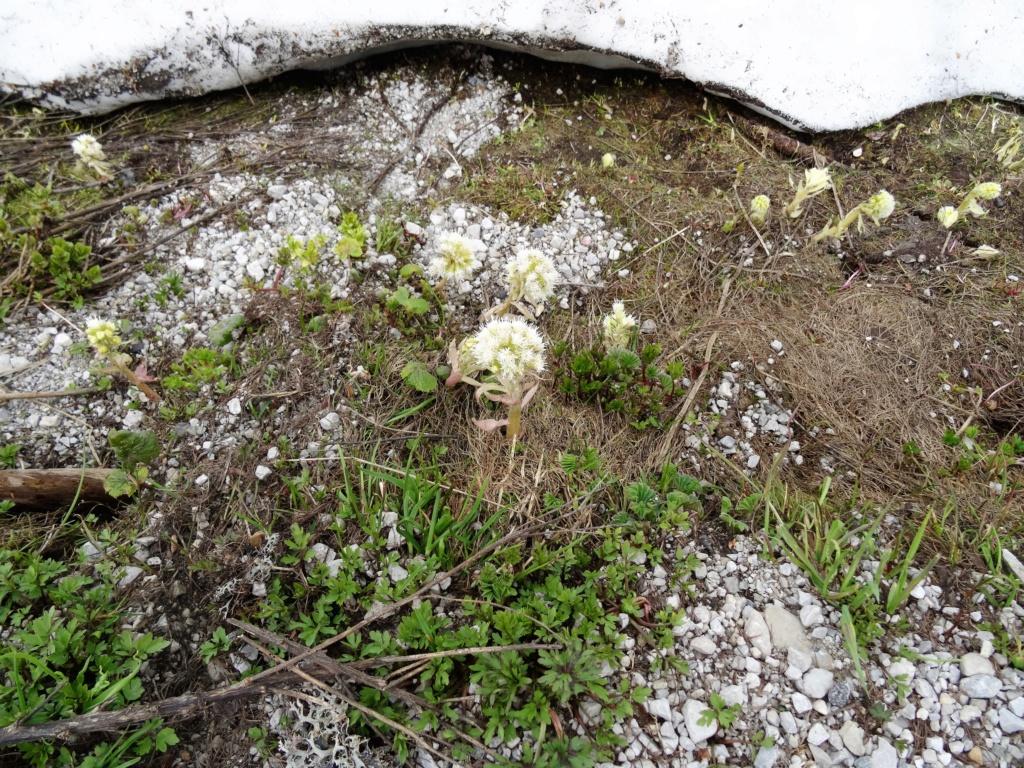 Wildblumen ( Sammelthread) - Seite 22 Dsc07533