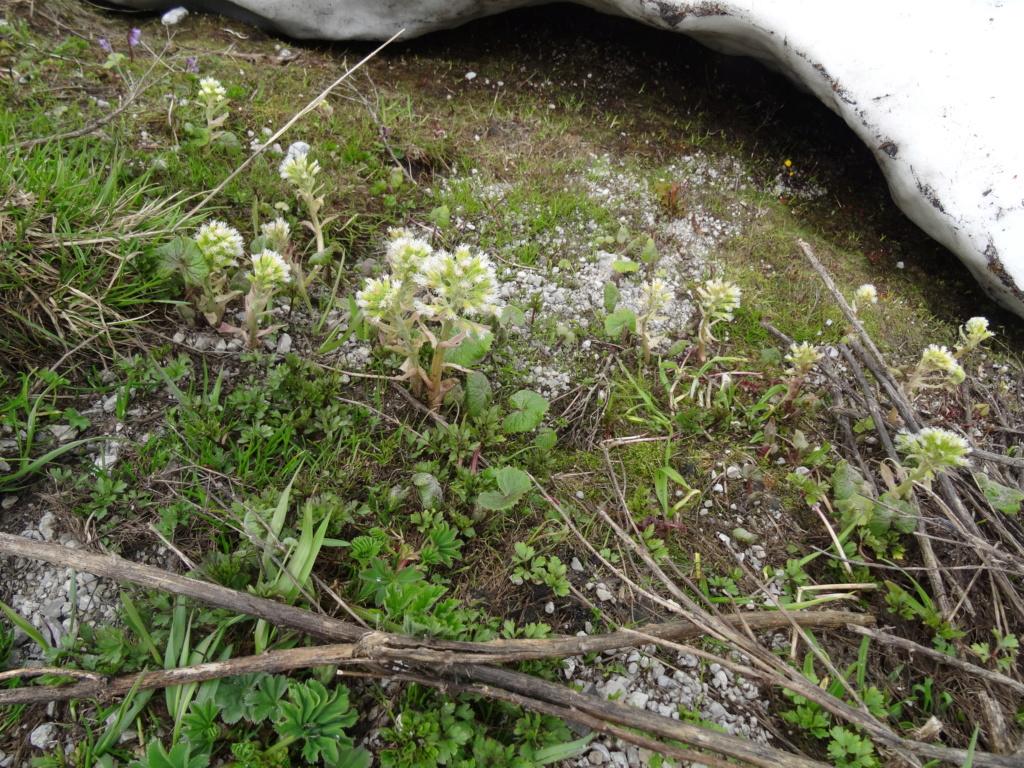 Wildblumen ( Sammelthread) - Seite 22 Dsc07534