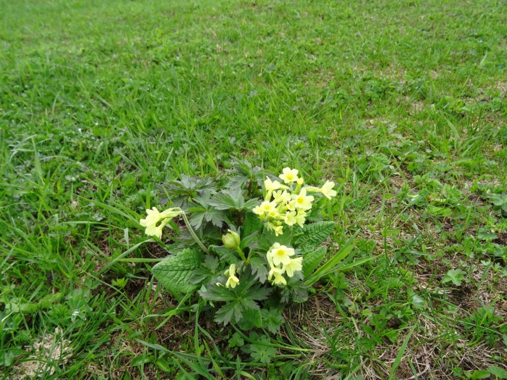Wildblumen ( Sammelthread) - Seite 22 Dsc07535