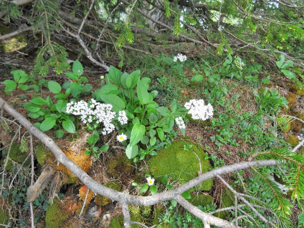 Wildblumen ( Sammelthread) - Seite 22 Dsc07610