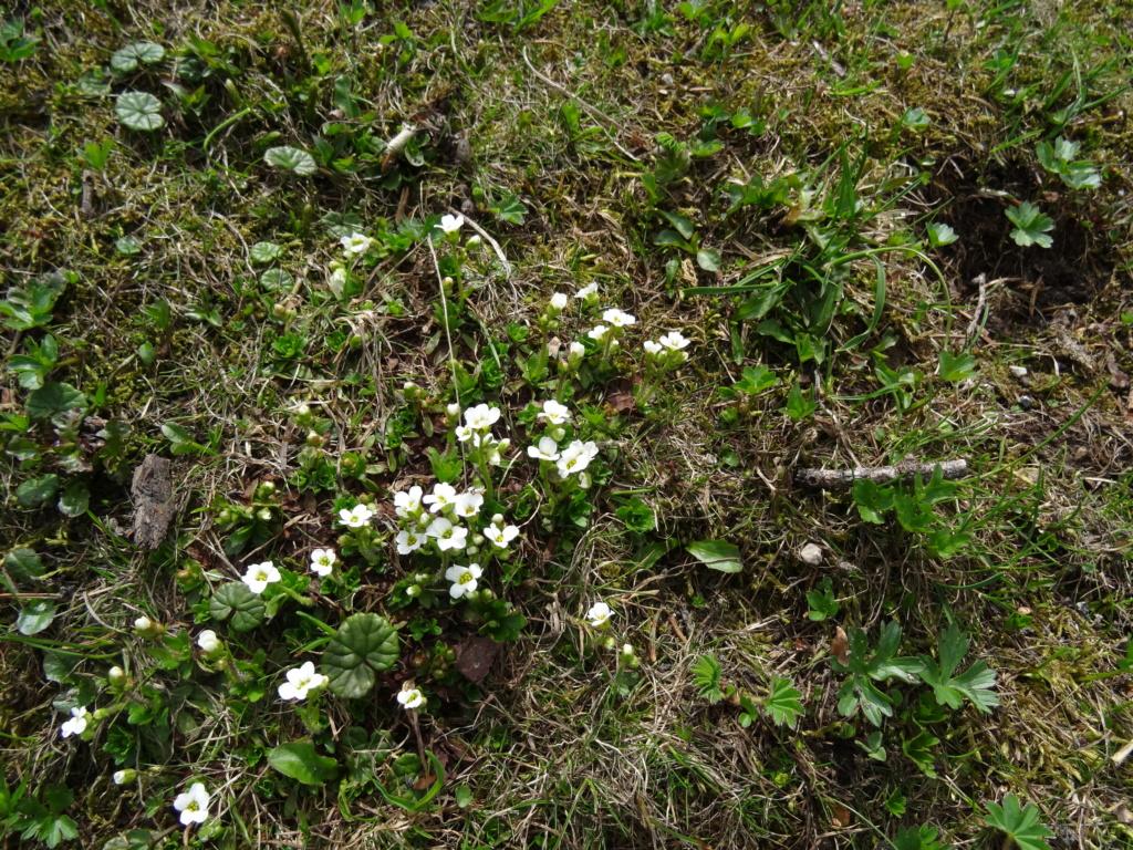 Wildblumen ( Sammelthread) - Seite 22 Dsc07612