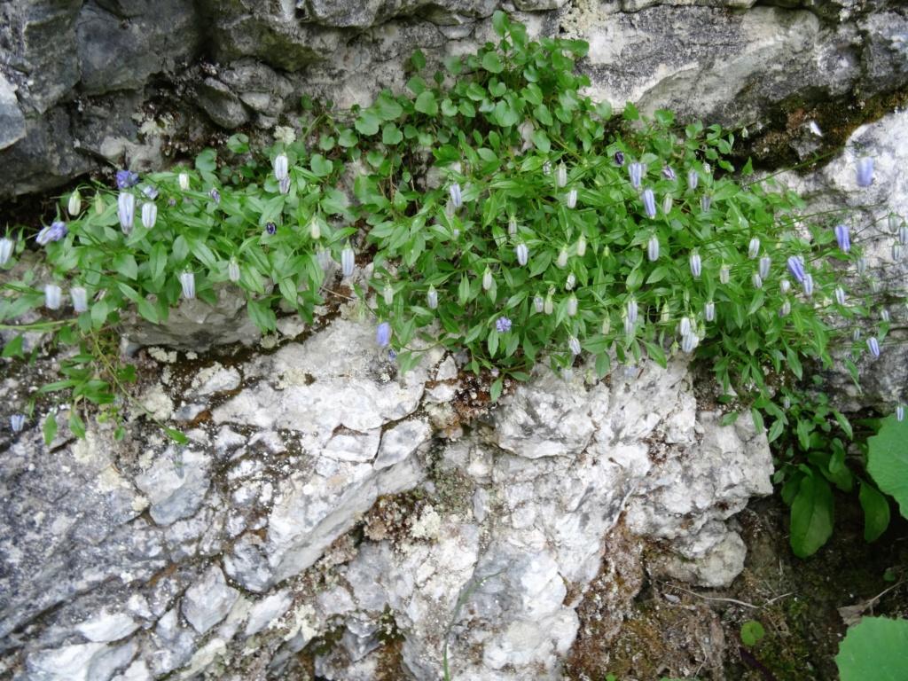 Wildblumen ( Sammelthread) - Seite 22 Dsc07718