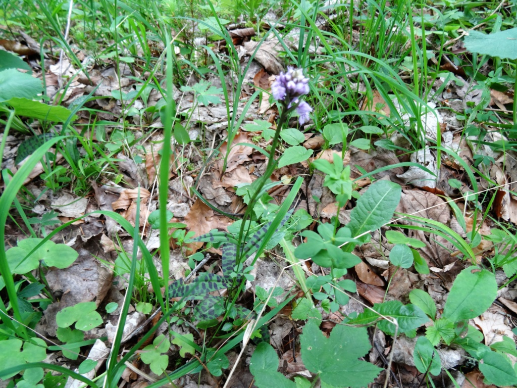 Wildblumen ( Sammelthread) - Seite 22 Dsc07720