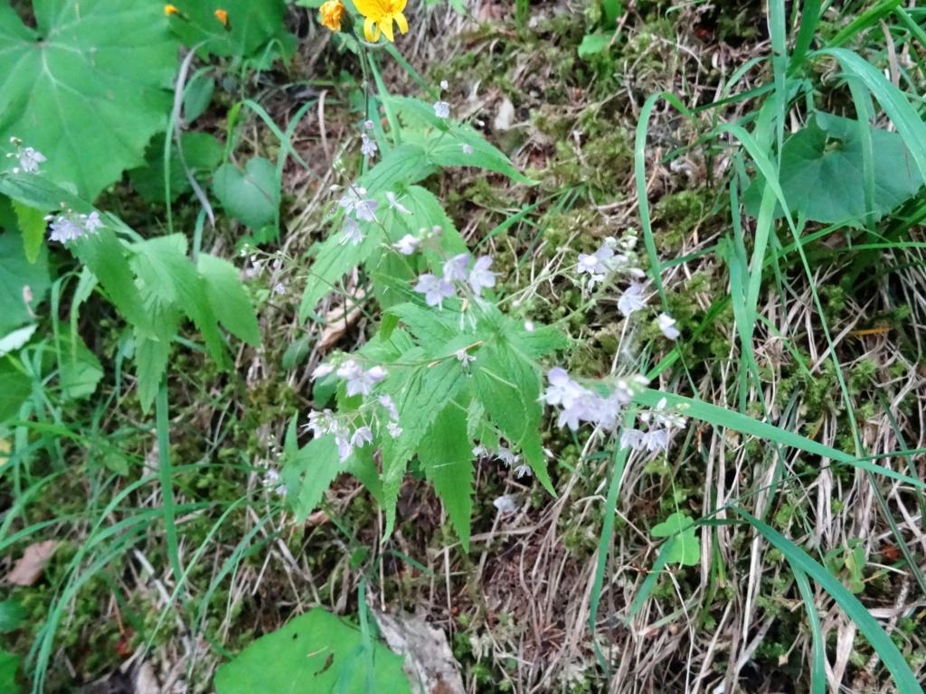 Wildblumen ( Sammelthread) - Seite 22 Dsc07722