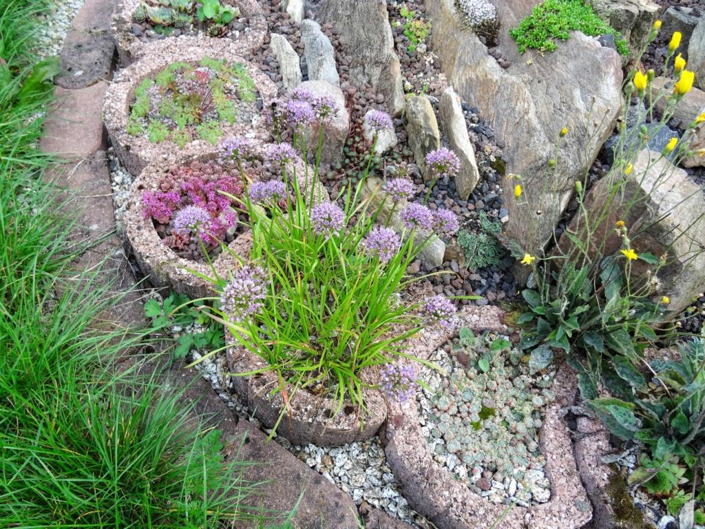 Hang- und Steingartenpflanzen - Seite 32 Dsc09130