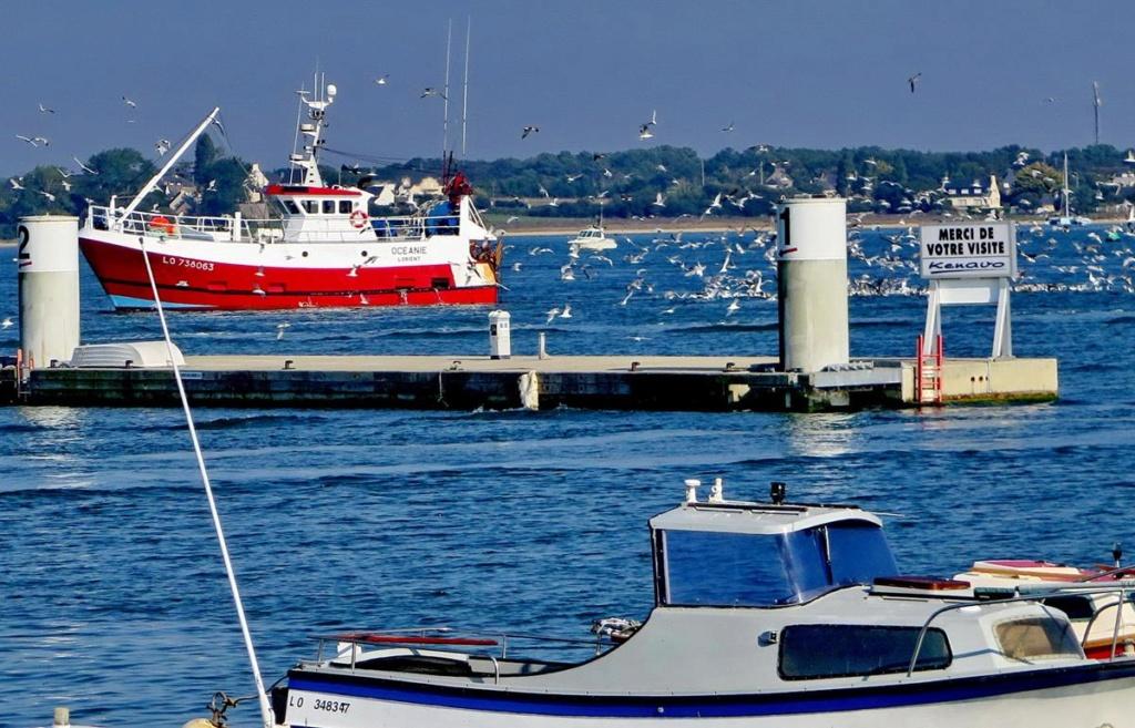 [VIE DES PORTS] Quelques bateaux de pêche (sur nos côtes Françaises) _copie28