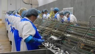 مصنع تصبير و تعليب السمك توظيف 30 عامل و عاملة بدون دبلوم و بعقد عمل دائم Aa_ooo10