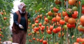 شركة فلاحية بمدينة اكادير تشغيل عاملات في مجال الفلاحة بالمزارع بدون دبلوم  Ao_aay11