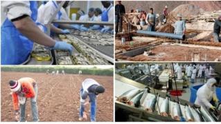 شركات و مصانع : توظيف عمال بناء و عمال فلاحين و عمال معامل و عاملات تغليف بدون دبلوم ولا شهادة  Ao_i_a10