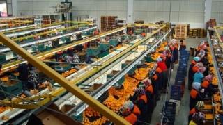 شركة فلاحية و مصنع بمراكش توظيف 20 عاملة براتب 13.46 درهم للساعة مع امتيازات CNSS+ AMO+ Congé Cap_ag10