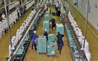 مصنع تصبير و تعليب السمك توظيف 30 عامل و عاملة بدون دبلوم و لا شهادة بعقد عمل دائم Pelapr10